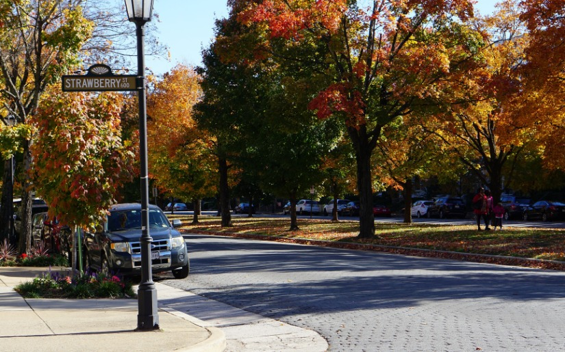 Assessment of Urban Tree Utilization & Forestry Programs of Richmond, VA and Raleigh, NC