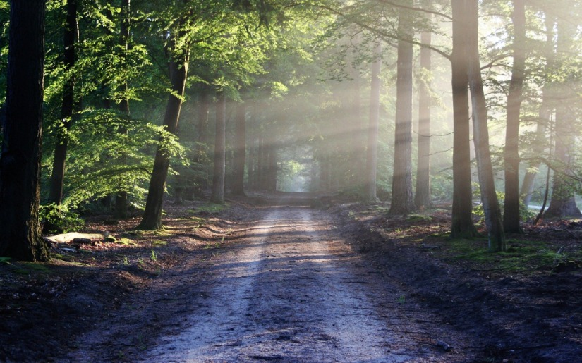 Commentary: Changing Paths - Lessons From the Forest