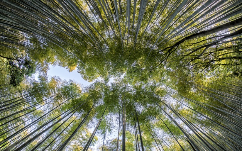 Bamboo Products and Their Environmental Impacts: Revisited