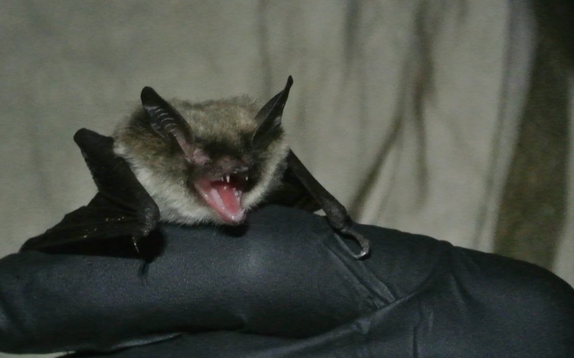 An Interview with Tim Sichmeller, a Bat Biologist